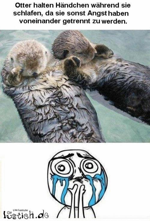 Otter halten Händchen