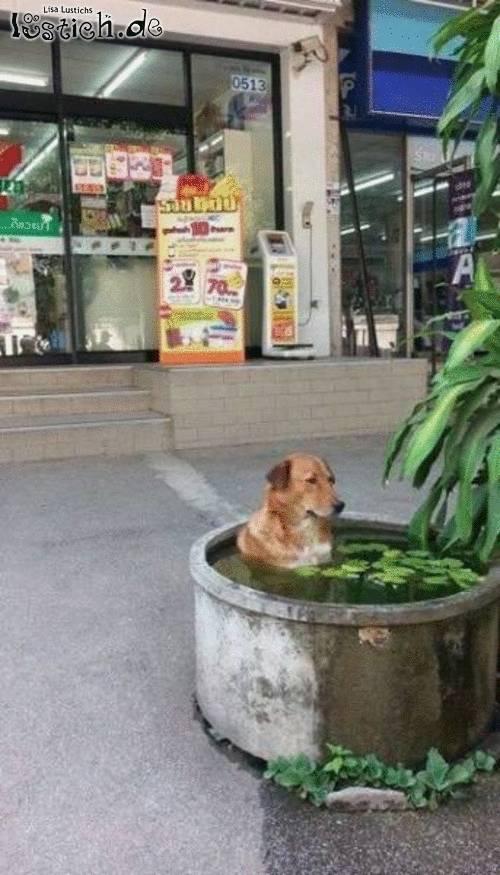 Hitziger Hund
