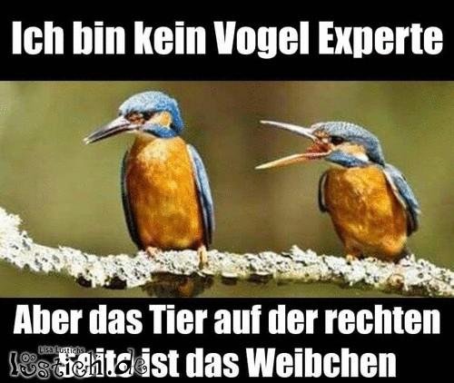 Vogelexperte
