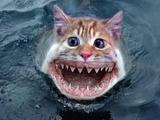 Katze-Hai