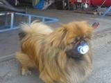 Hund mit Schnuller