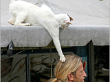 Achtung Katzenangriff