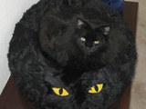 Katze auf der Katze