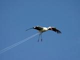 Vogel oder Flugzeug