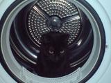 Katze im Trockner