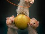 Sportliche Hamster