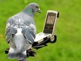 auch Vögel brauch ein Navi