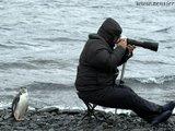 Pinguin ärgert Fotografen