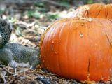 Eichhörnchen isst Kürbis