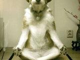 Yoga Hund