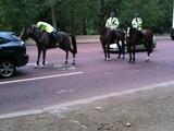 Polizeipferd pullert auf die Straße