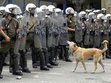 Hund bellt Polizei an