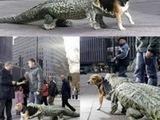Hund mit Krokodil