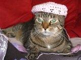 Katze mit Mütze