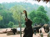 Basketball-Elefant