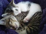 Katzen kuscheln sich warm