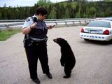 Polizistin ermahnt Bären