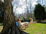 Hund gegen Baum