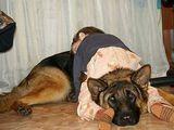 Schlafhund