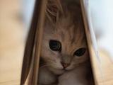 Verstecktes Kätzchen