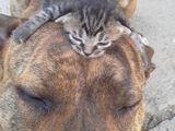 Müde Tiere