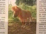 Böses Pony