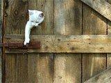 Clevere Katze