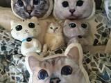 Katzen im Bett