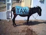 Süßes Taxi