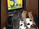 Katzenprogramm