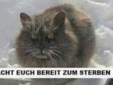 Zornige Katze