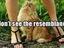 Katze guckt Frau unterm Rock