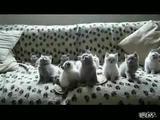 Wackelkatzen