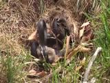 Badass-Kaninchen