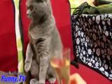 Lustiche Katzen