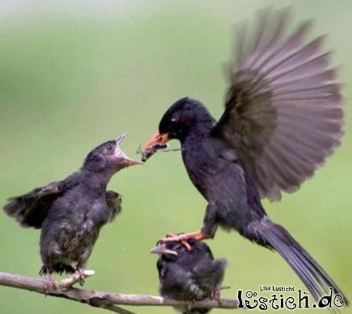 Rücksichtsloser Vogel