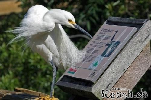 Lesender Vogel