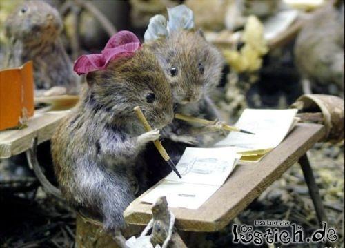 Mäuse in der Schule