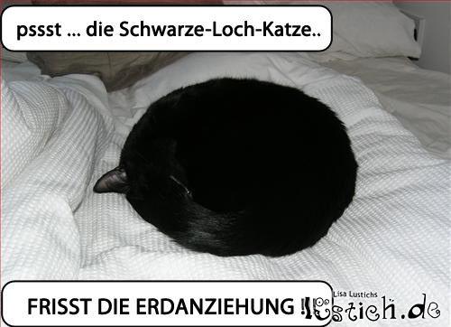 Schwarze Loch Katze