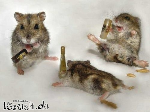 Besoffene Hamster