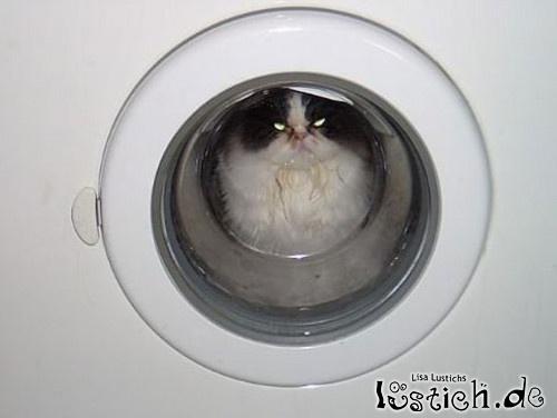 Katzenwäsche