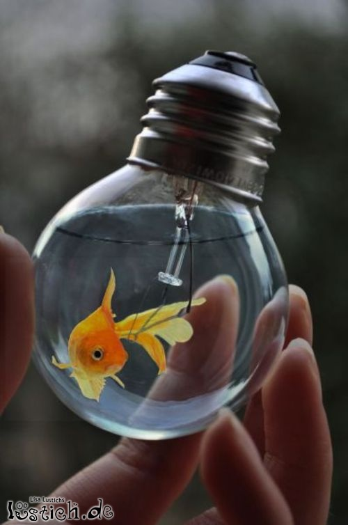 Goldfisch in Glühbirne