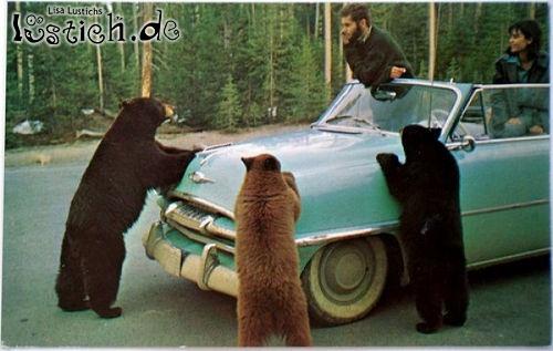 Bären-Gang