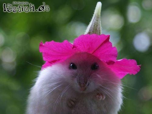 Maus mit Hut