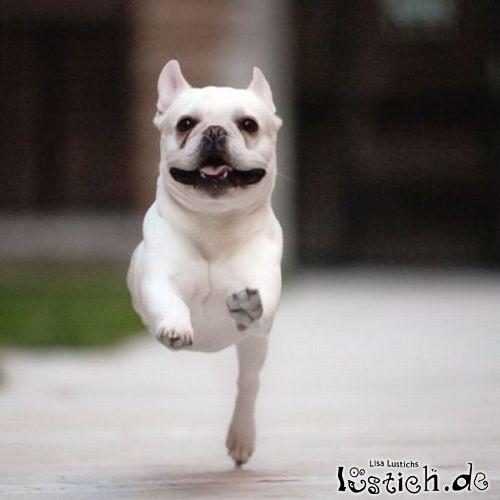 Hund schwebt (fast)