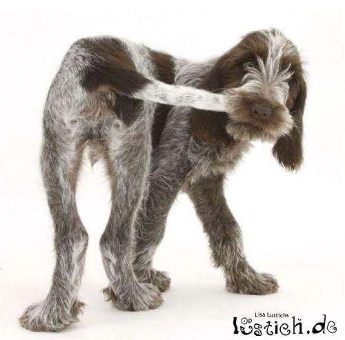 Sprichwörtlicher Hund
