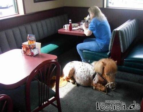 Pony muss warten