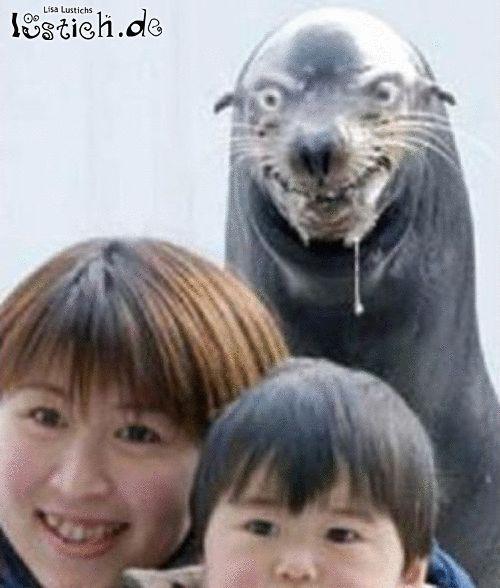 Angriff der Robben