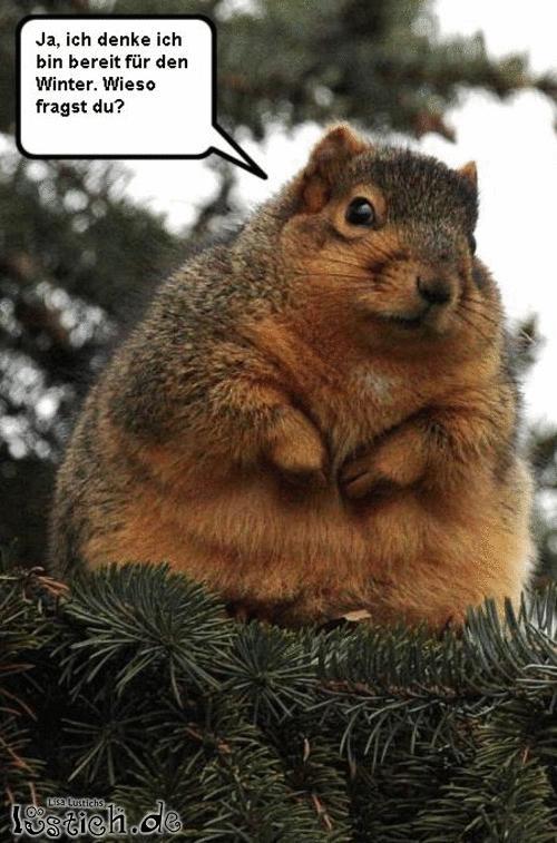 Dickes Eichhörnchen