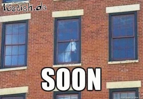 Pferd kann warten